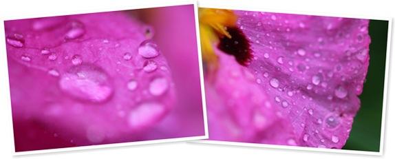 View Rain on Pink Petals