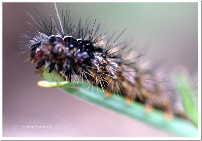 Spikey Caterpillar_01