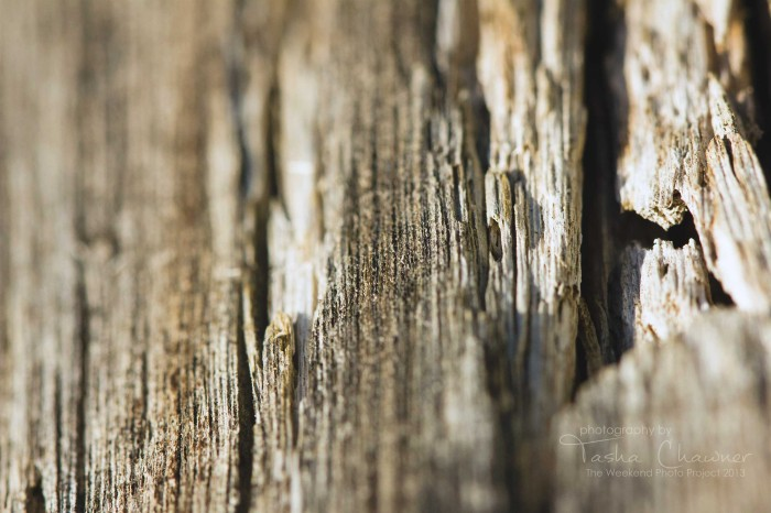 The Weekend Photo Project: texture
