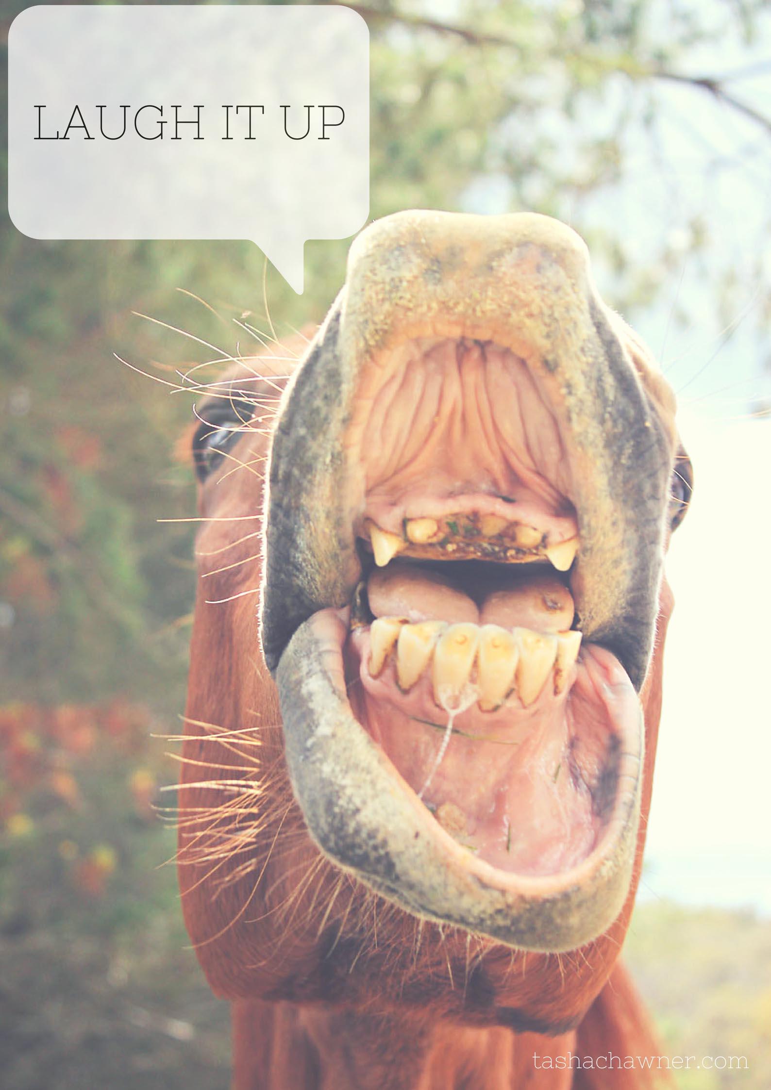 laugh-it-up