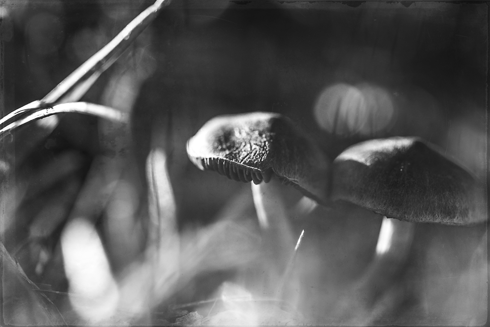 two-mushrooms-4