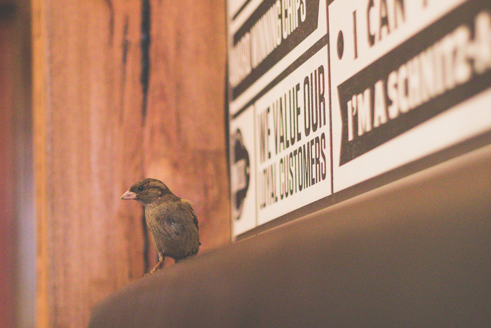 little-birds-are-everywhere-in-melbourne