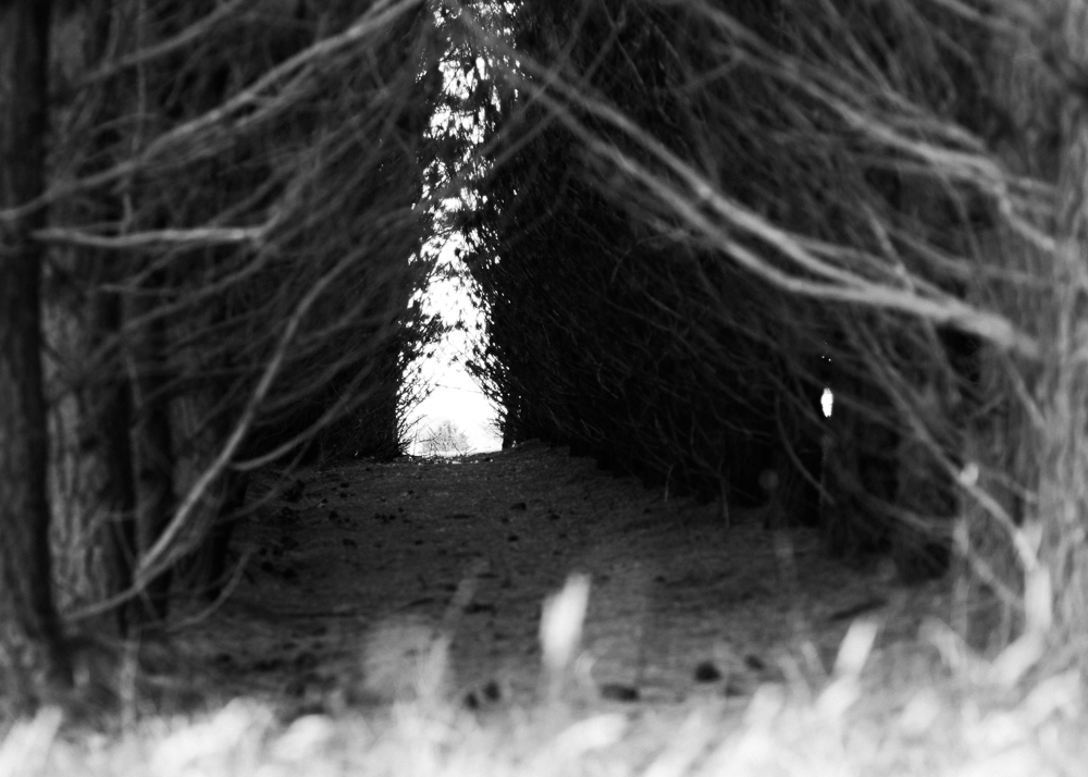 looking into the forest - photography by tasha chawner