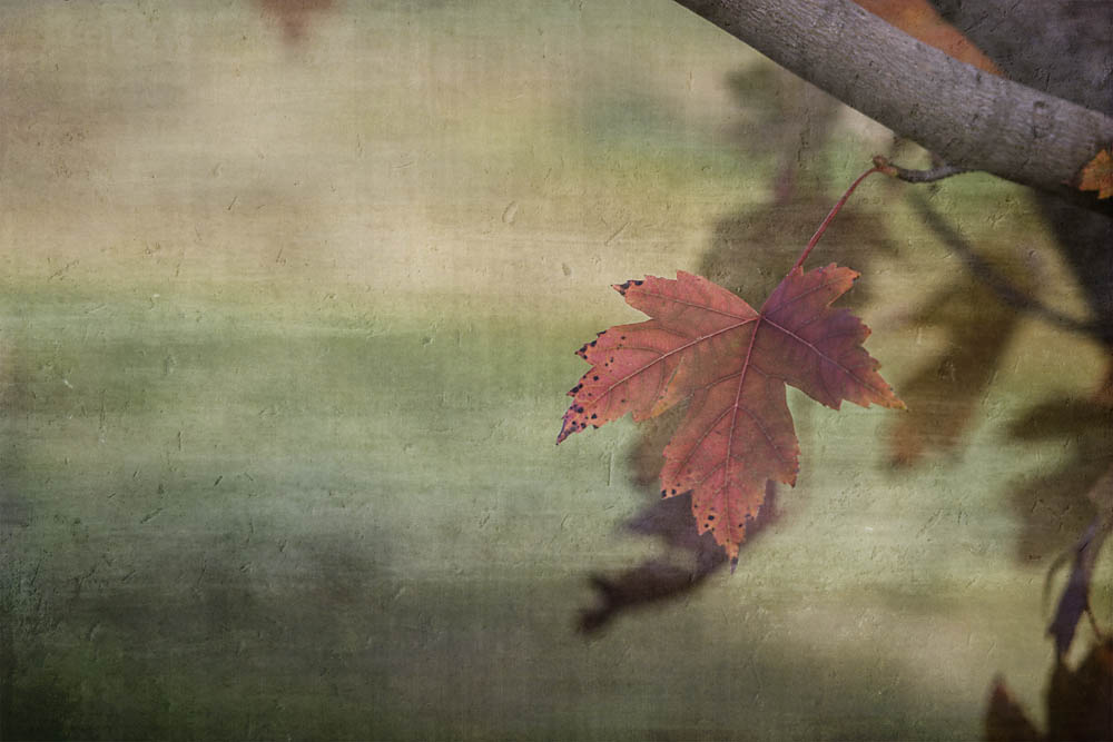 autumn leaves mean a cool change is coming
